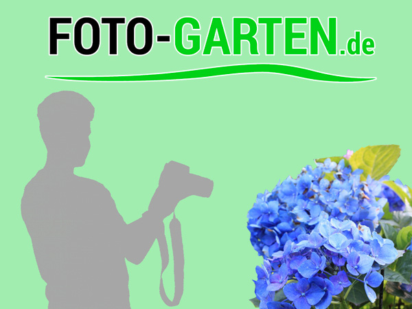 FOTO-GARTEN-Dresden